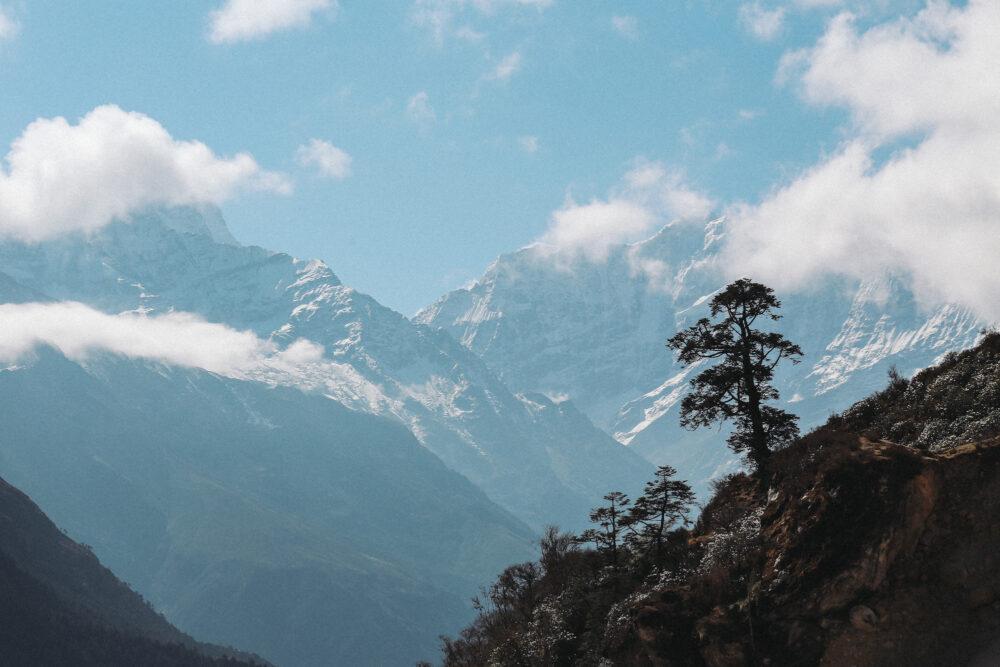 Himalayan Mountain Juniper