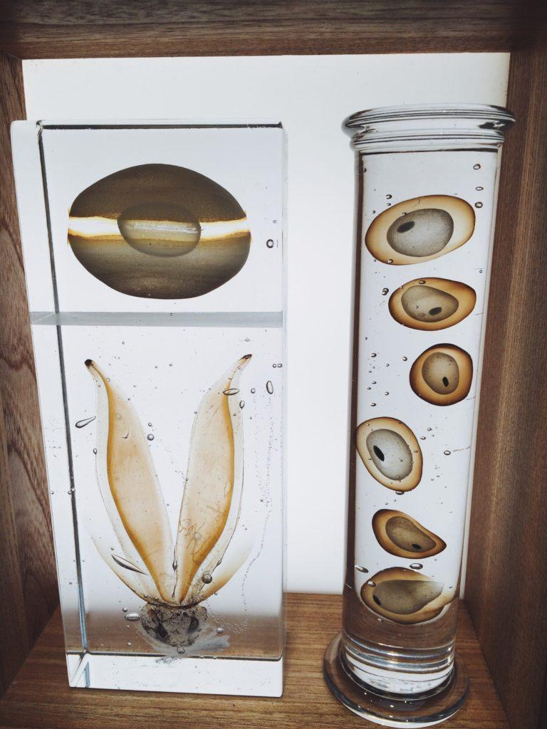 Collect Saatchi Inspiration Steffen Dam Specimen Cabinet