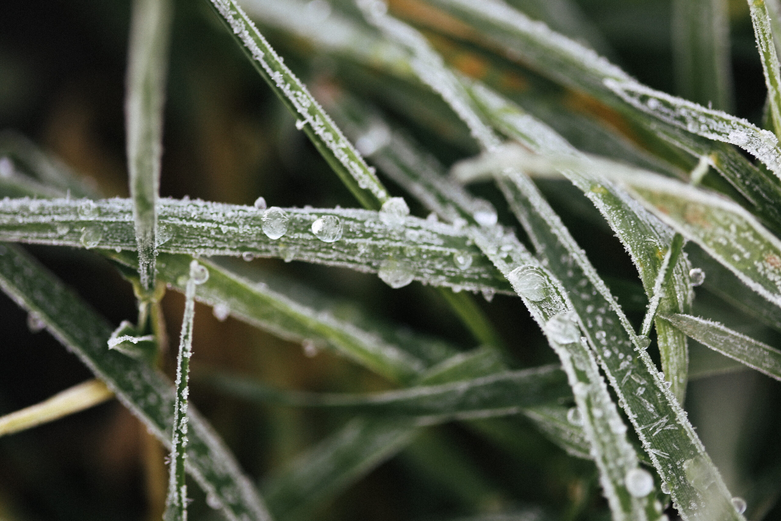 Winter Frost for Jewellery Inspiration