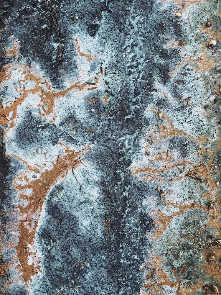 dovile b algea eutrophication kaunas reservoir inspiration