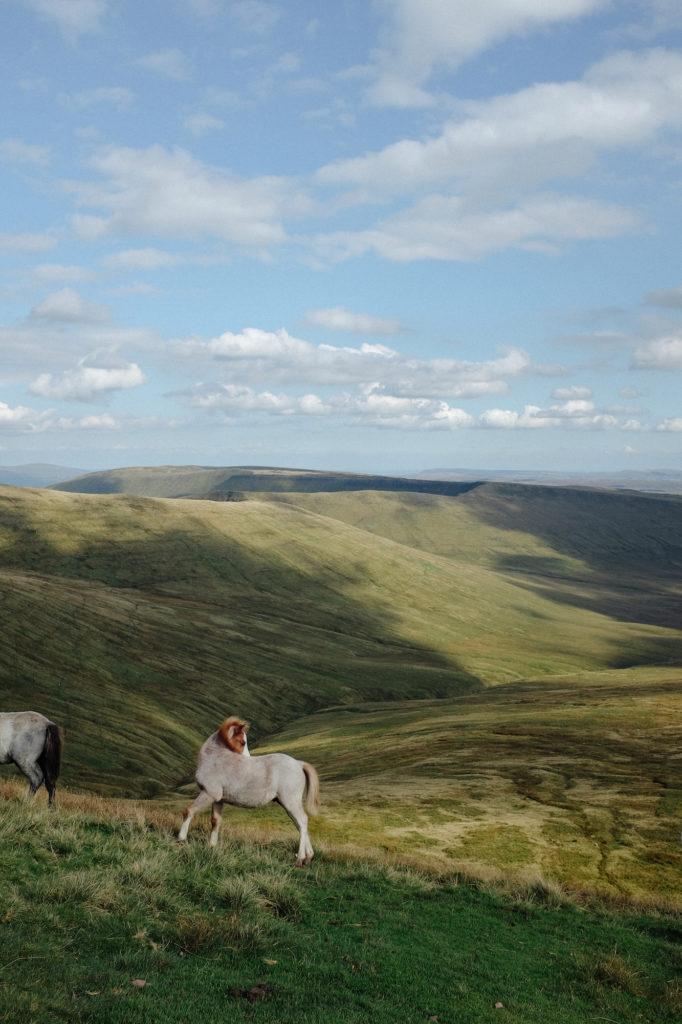 dovileb wales wild horses brecon beacons